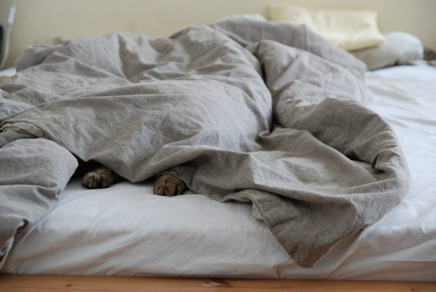 dog_sleeping_in_bed